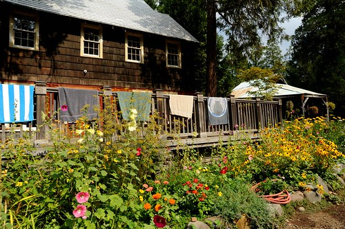 Towels drying out at the lodge deck fence, late summer flowers blooming, red water hose, Breitenbush Hot Springs, Breitenbush, Marion County, Oregon, USA by Wonderlane