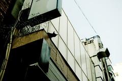 Down Town Girl (H2@Japan) Tags: japan cat tokyo town nikon downtown kitty 日本 東京 猫 straycat 野良猫