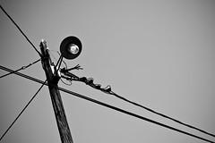 Just a few Lines (Al Fed) Tags: light summer lamp lines poles hr krk 85mmf14 20110925