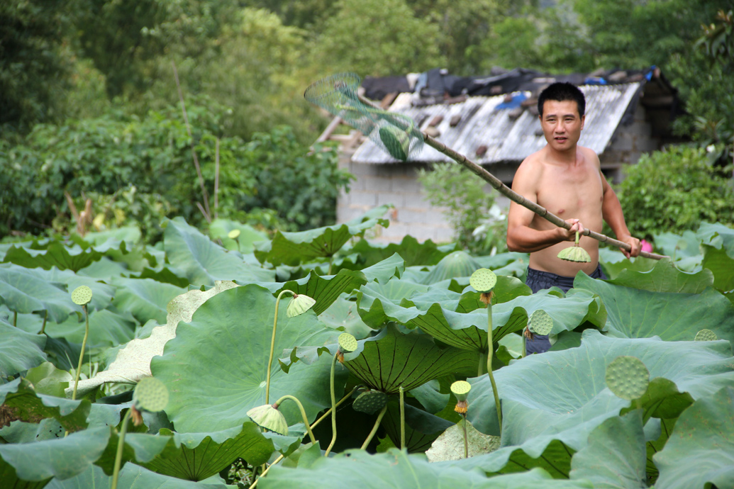 Lotus Farm, Yangshuo, China