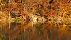 szimmetria / symmetry (debreczeniemoke) Tags: autumn lake forest landscape pond symmetry transylvania transilvania t baiamare tjkp erdly sz erd nagybnya szimmetria bdit canonpowershotsx20is fernezely