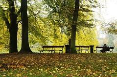 Colors of Autumn   (15) (Sau.Rieng) Tags: niceshot doubleniceshot tripleniceshot mygearandme mygearandmepremium mygearandmebronze mygearandmesilver mygearandmegold mygearandmeplatinum ringexcellence artistoftheyearlevel2
