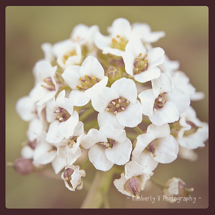 Macro-flower-buds-EDIT