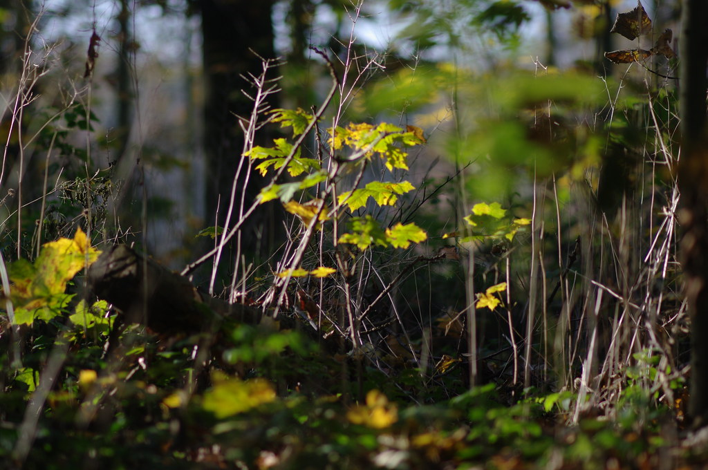 undergrowth, Haagse Bos