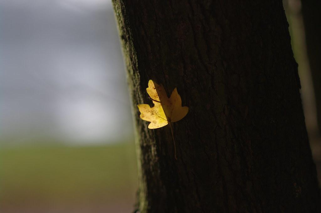 backlit leaf on tree, Haagse Bos
