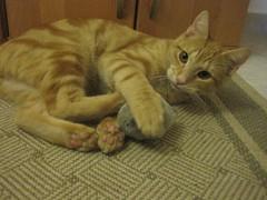 playwilly (nasharz) Tags: catnipaddicts