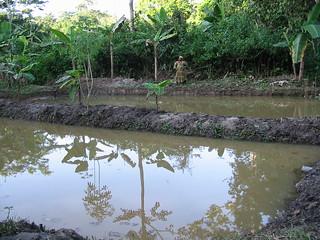 Aquaculture, Cameroon. Photo by Randall Brummett, 2002