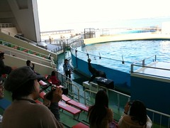 (naokomc) Tags: aquarium seal fukuoka uminonakamichi