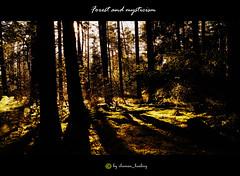Wald und Mystik/Forest and mysticism//  (shaman_healing) Tags: autumn light shadow colors licht seasons forrest herbst jahreszeiten mystik wald schatten farben mysticism musictomyeyeslevel1