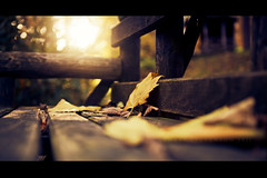 Fallen (Stuart Stevenson) Tags: wood uk autumn light sun colour leaves backlight woodland bench photography scotland bokeh diffused contrejour fallenleaves lowangle hss clydevalley thanksforviewing canon5dmkii stuartstevenson stuartstevenson