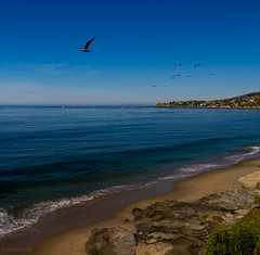 Along the Coast of Southern California (Darren LoPrinzi) Tags: ocean california ca summer sky usa motion color bird beach nature water colors birds animal america canon landscape bay coast us movement rocks colorful waves skies unitedstates pacific photos wildlife air sigma racing pacificocean beaches laguna oceans southerncalifornia westcoast lagunabeach coasts emeraldbay sigma18250 canoeos7d