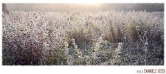 occhi bassi (loudechoes) Tags: winter ice field fog landscape country campagna bologna campo nebbia inverno paesaggio ghiaccio