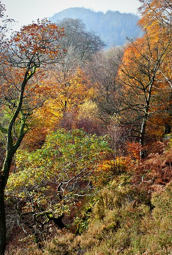 Autumn colours, Ullswater.