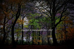 .`.  Enchanted forest  .`. (heavenxxx89 been at hospital al day catch up asap) Tags: uk autumn trees london nature forest landscape woods scenery hampsteadheath enchantedforest englishautumn autumninengland mygearandme mygearandmepremium nikond3100