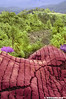Sg Palas Tea Plantation (Infrared) (2121studio) Tags: nature nikon ali malaysia indah cameronhighlands kuantan alam malaysianphotographer drali sgpalasteaplantation 2121studio kuantanphotographer pahangphotographer ciptaanallahswt 0139342121 nubleebinshamsubahar