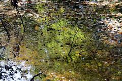 L'asphyxie (Yvan LEMEUR) Tags: water automne eau reflets fort bois feuillesmortes asphyxie