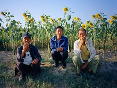 . (GraemeNicol) Tags: china morning portrait asia farmers sunflowers fields hebei cigarettes zhangjiakou fujiga645zi