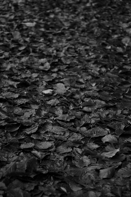 autumn leaves bw