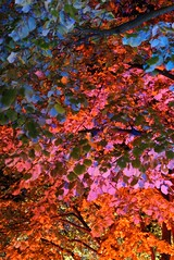 """Colourful Leafs • <a style=""""font-size:0.8em;"""" href=""""http://www.flickr.com/photos/52838876@N07/6273038312/"""" target=""""_blank"""">View on Flickr</a>"""