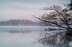 Morning in Lychen (Dietrich Bojko Photographie) Tags: morning autumn mist lake reflection nature water fog germany deutschland europe lychen brandenburg uckermark dietrichbojko dietrichbojkophotographie