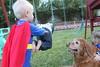 IMG_9086 (drjeeeol) Tags: dog pet halloween goldenretriever costume backyard tiger superman will superhero cape supergirl triplets toddlers 2011 36monthsold