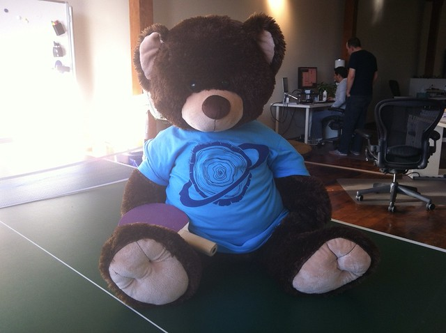 Bear in new shirt