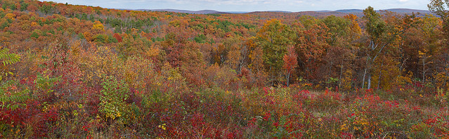 Fall Colors in the Saint Francis Mountains of the Ozarks, near Arcadia, Missouri, USA