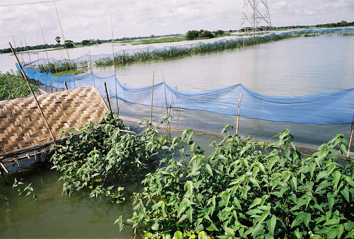 Farm and fisheries, Bangladesh, Photo by CBFM-Fem Com Bangladesh, 2006