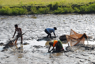Men and women fishing, Bangladesh. Photo by WorldFish, 2007