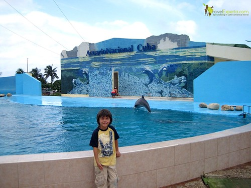 Dolphin Show at National Aquarium in Havana Cuba