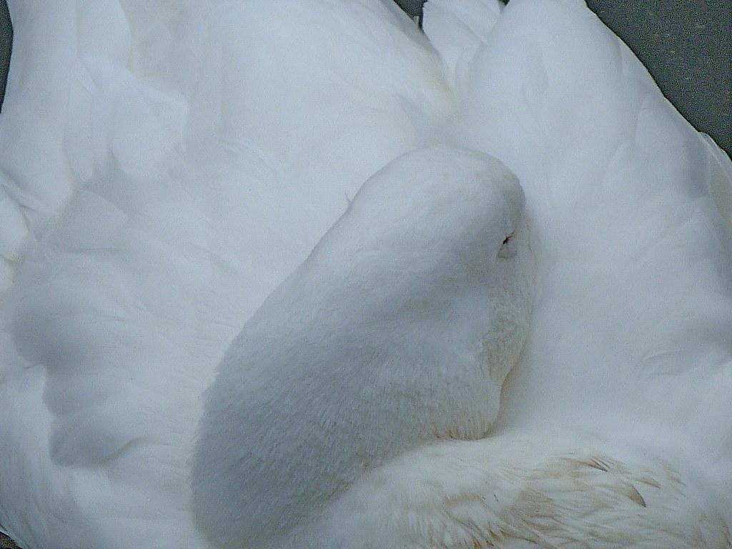 03-11-2011-sleeping-beauty