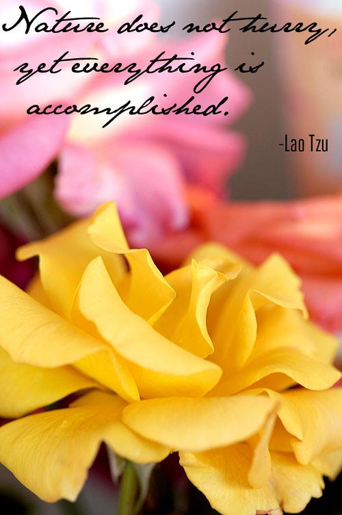 Lao Tzu quote