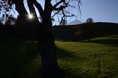 SunStar (AincaArt) Tags: light shadow mountain tree berg schweiz switzerland licht weide meadow pasture schatten baum niesen berneroberland berneseoberland sunstar mungga sonnenstern nikond7000 aincaart