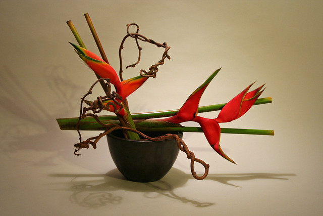 Heliconia and kiwi vine