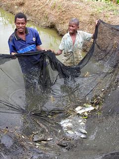 Aquaculture Fish pond in Mway Wathu Association, Tsuende village, Moatize District, Tete Province, Mozambique. Photo by Peter Fredenburg.