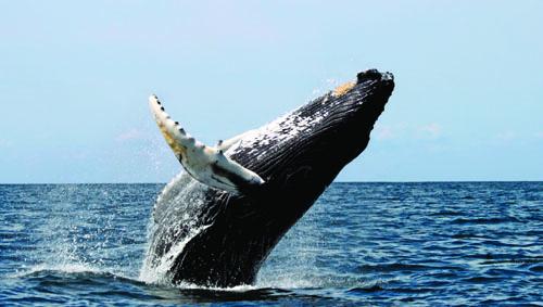 Whale Breach.jpg