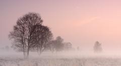 Morning mist Bargerveen (Kees Waterlander) Tags: sunrise landscape nederland peat veen moor bog drenthe landschap moorland zonsopkomst bargerveen theneterlands hoogveen