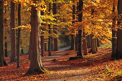 Strid Wood VI (rgarrigus) Tags: autumn trees england leaves forest landscape woods october yorkshire foliage stridwood wharfedale greatphotographers garrigus robertgarrigus robertgarrigusphotography