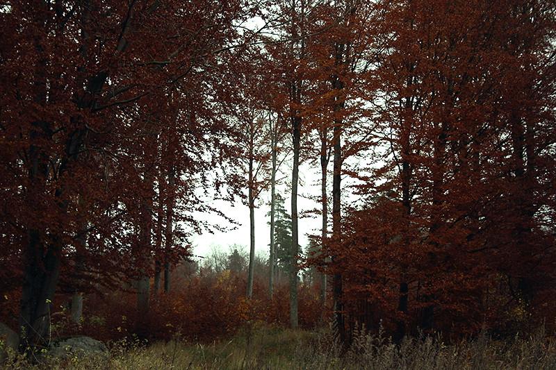 eh skog