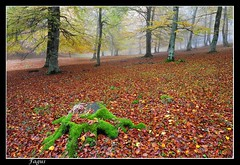 Seriearen azkena (Fagus) Tags: naturaleza nature arbol arboles d70 natura bosque fagus navarra bosques nafarroa