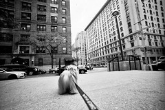 let's go (Charley Lhasa) Tags: city nyc newyorkcity urban dog ny newyork film 35mm lomo walk manhattan wideangle scan neighborhood upperwestside leash lead charley uws lhasaapso lcw lti stuckshutter charleylhasa software:adobe=lightroom file:original=jpeg set:name=newnew digitalminilab lomolcw lens:minigon1=1745 minigon117mmf45 camera:lomo=lcw lomographybw400 lomoladygrey400 roll:number=lcw0010 folder:name=0164 image:number=016407 date:uploaded=111117185223 set:name=lti323123 lti:scan=323123 set:name=lcw0010
