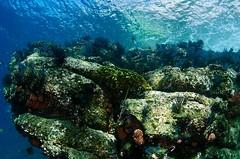 reef8381 (gerb) Tags: ocean blue water topv111 coral island topv333 underwater purple scuba reef cortez seaofcortez tvp aquatica cupcoral d7000 sigma1017fe