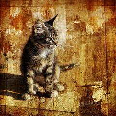 Un gato marrakechi (osolev) Tags: africa cat photoshop square chat ps morocco gato maroc marrakech marruecos textured cs4 cuadrada osolev