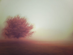 time travel (Minghua Nie) Tags: morning travel autumn tree fog back wind time slowshutter medusa impression app nie icm pictureshow minghua iphone4 intentionalcameramovement