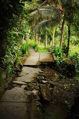 The Mystic Way (Yann LECOEUR Photography) Tags: trees bali green broken leaves yellow way indonesia concrete stones vegetation mystic canonef50mmf14usm canoneos5dmarkii yalestudio yehpetulu