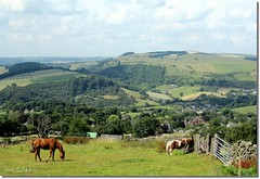 Beautiful day (Jan 130) Tags: uk england horses landscape derbyshire guyfawkes highpeak fantasticnature mygearandme