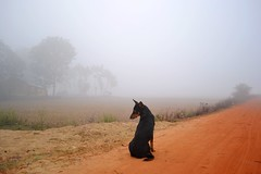 Misty Dawn (pallab seth) Tags: life morning winter india mist fog composition landscape dawn december village indian scene bengal gettyimages westbengal villageroad lifeinthemist  indianlandscapephotography  unseenbengal sabarbangla  beautifulbengal  brandbengal grambanglarchobi