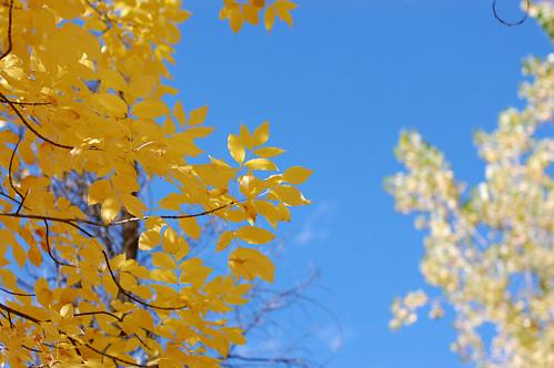 blue::yellow