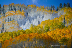 When Seasons Collide ... chaos can be beautiful! (Aspenbreeze) Tags: autumn winter snow nature frost niceshot seasons aspens grandmesa tps wow1 blueksy coloraod grandmesacolorado platueau doublyniceshot coth5 aspenbreeze highaltitutde aboveandbeyondlevel1 moonandbackphotography topphotoshots gpsetest
