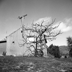 Bannockburn / Central Otago / New Zealand (Matthew McCutcheon) Tags: newzealand blackandwhite bw film matt lomo lomography matthew lubitel epson quintin 120mm bannockburn 166 bwf v700 mccutcheon lomonz